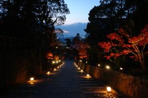 秋のライトアップ・参道(2011ブログアップ)