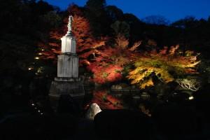 秋のライトアップ・友禅苑(2011ブログアップ)