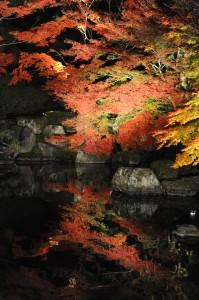 秋のライトアップ・友禅苑2(2011ブログアップ)
