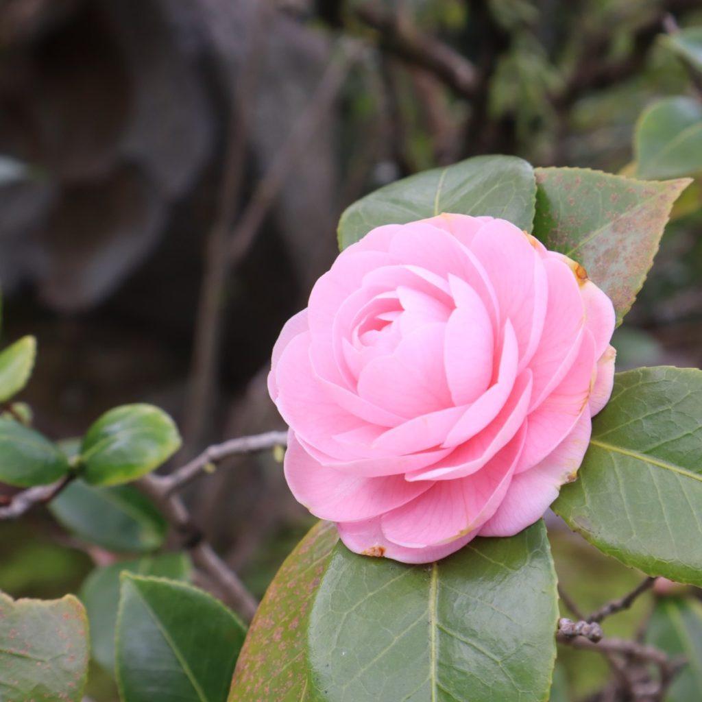 京都も春がやってきました