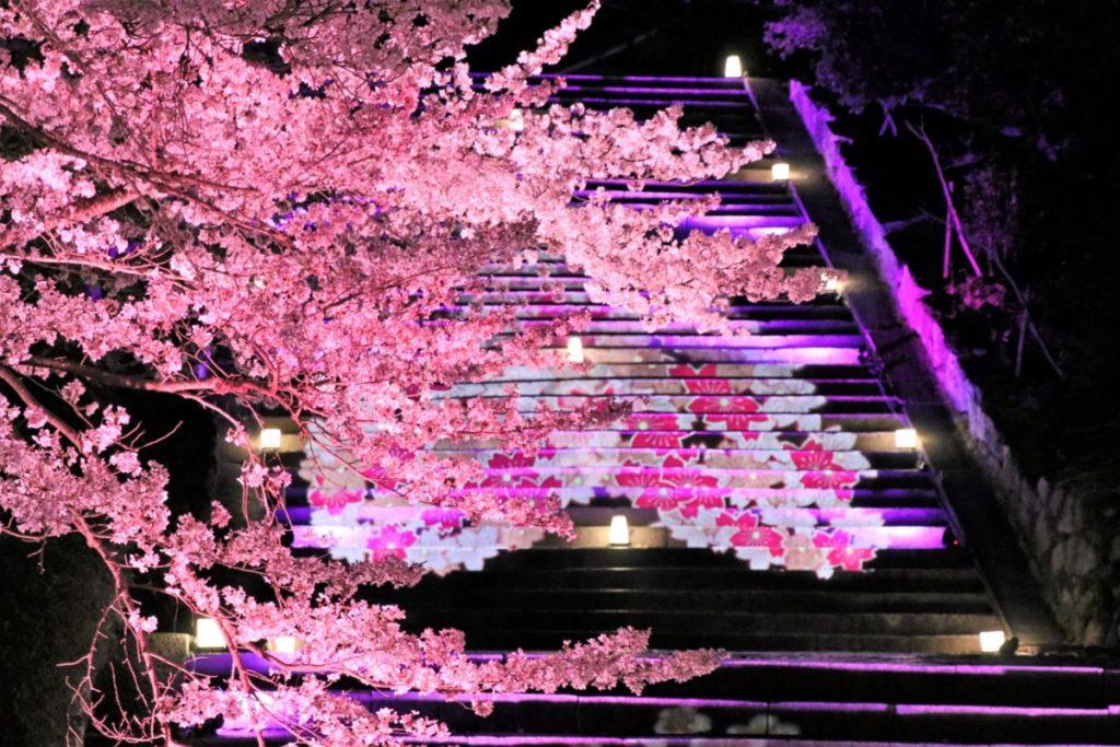 桜の振り返りとお知らせ